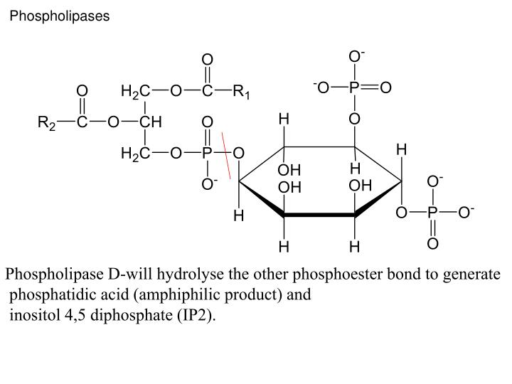 Phospholipases