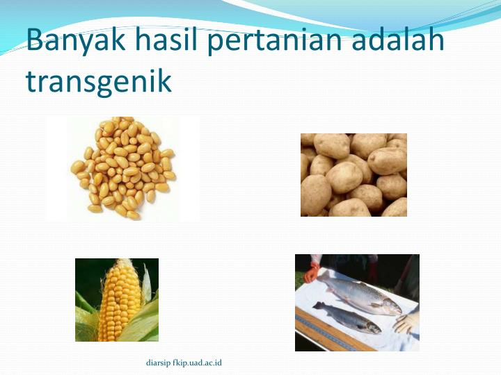 Banyak hasil pertanian adalah transgenik