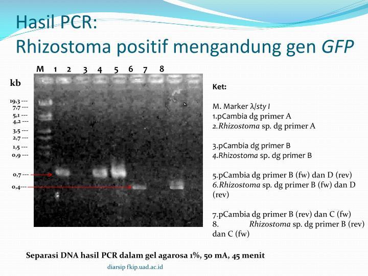 Hasil PCR: