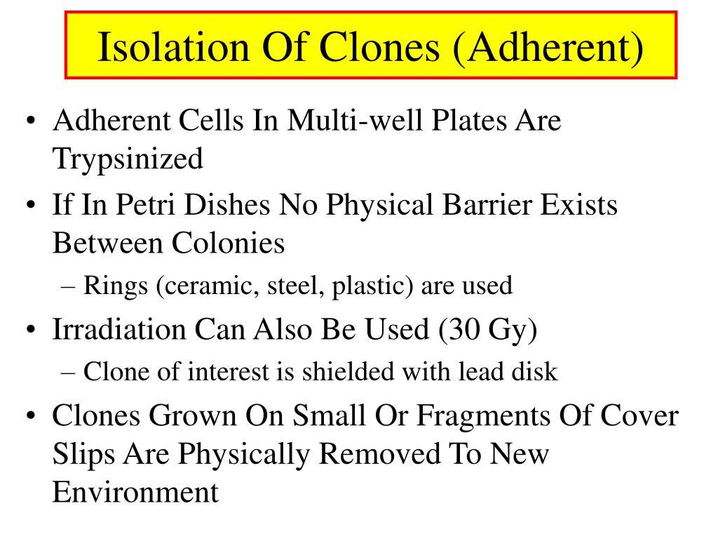 Isolation Of Clones (Adherent)