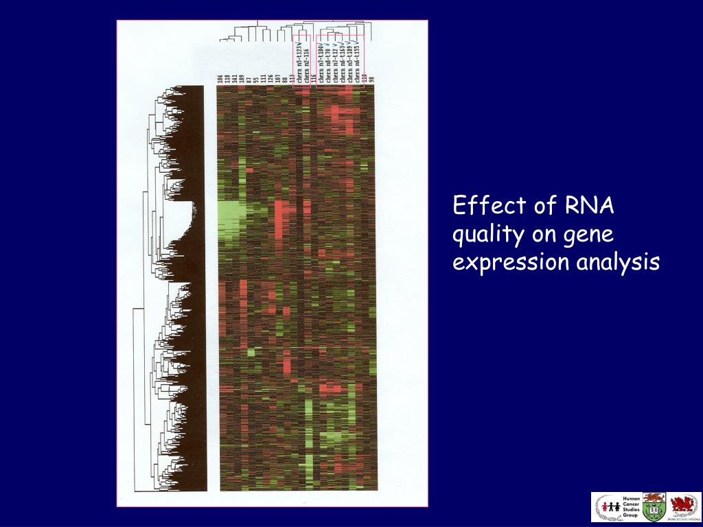 Effect of RNA quality on gene expression analysis