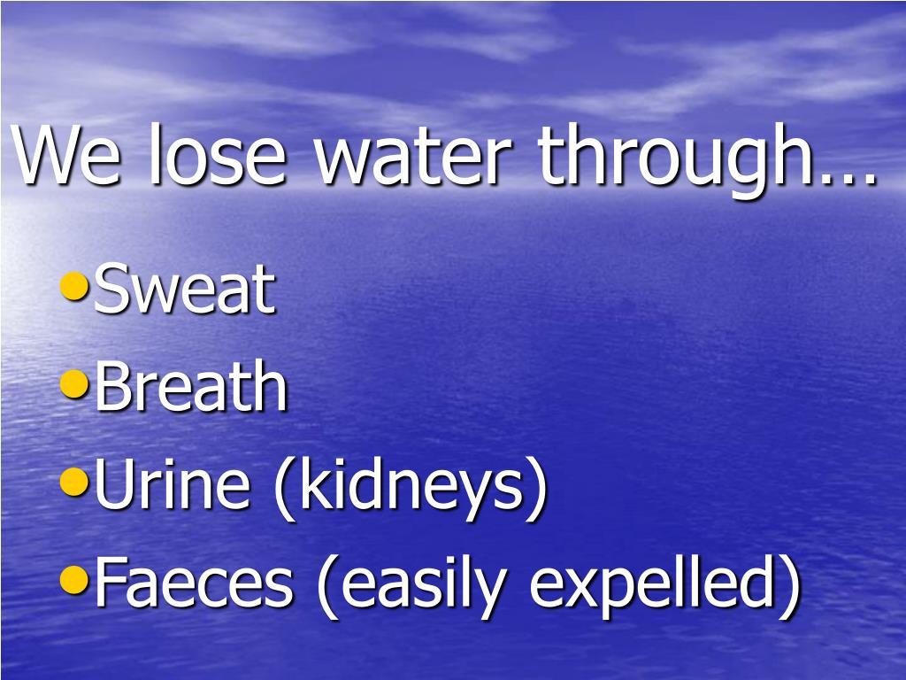 We lose water through…