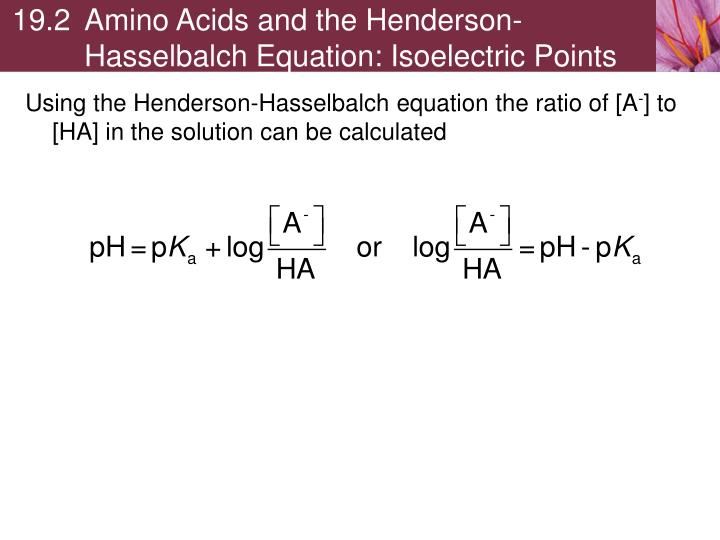 19.2Amino Acids and the Henderson-Hasselbalch Equation: Isoelectric Points