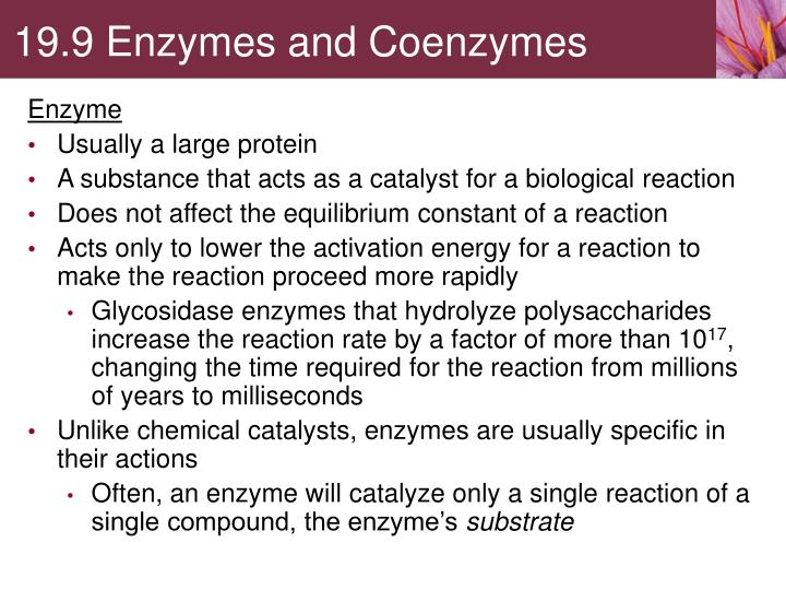 19.9 Enzymes and Coenzymes