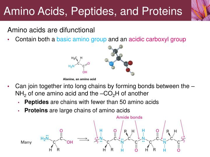 Amino acids peptides and proteins1