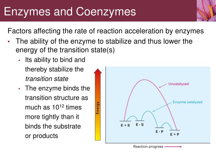 Factors affecting the rate of reaction acceleration by enzymes