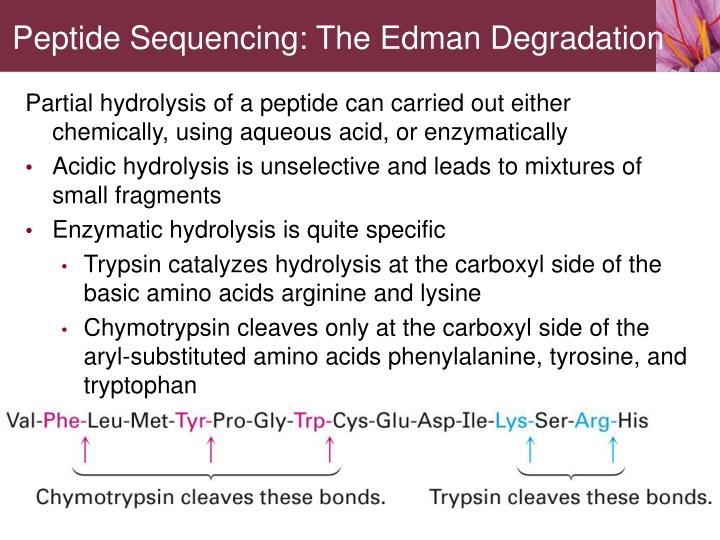 Peptide Sequencing: The Edman Degradation