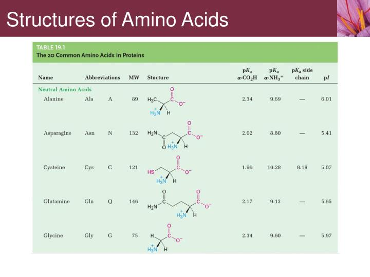 Structures of Amino Acids