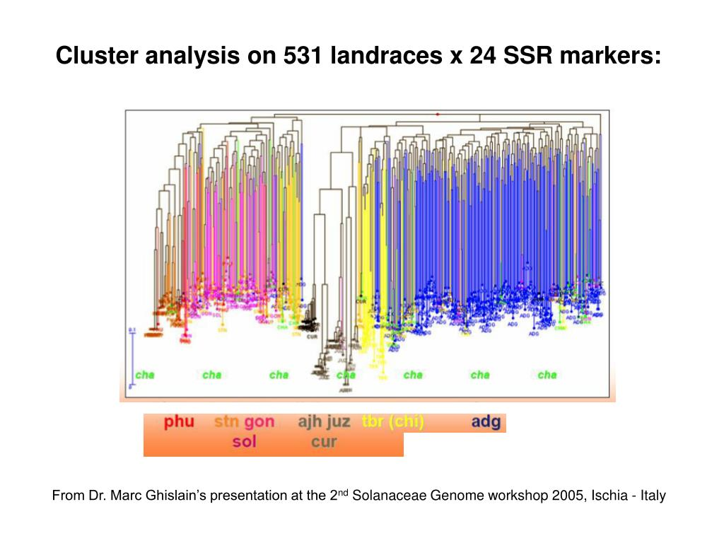 Cluster analysis on 531 landraces x 24 SSR markers: