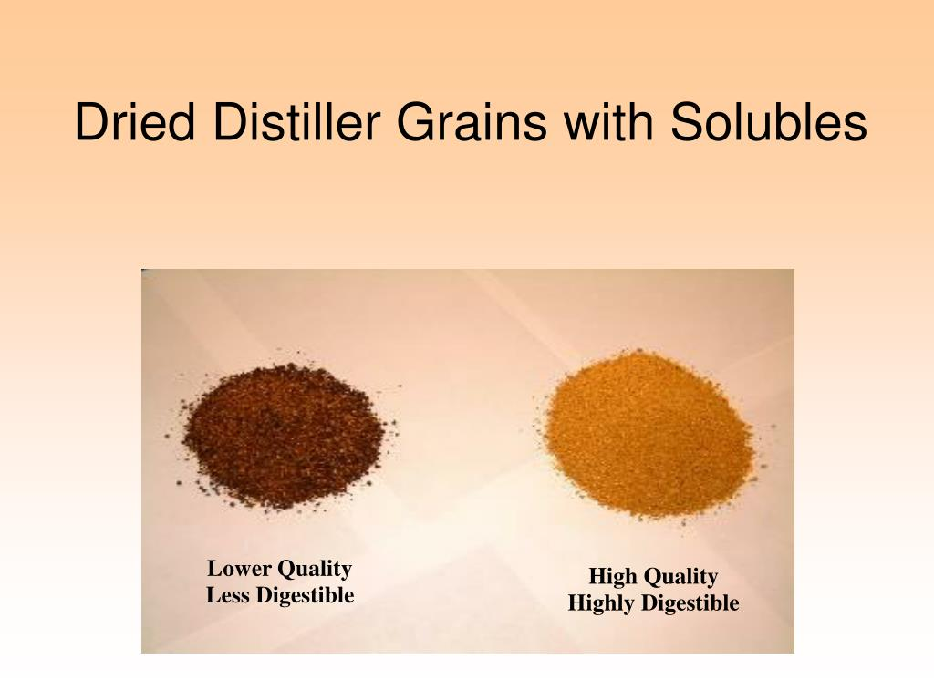 Dried Distiller Grains with Solubles
