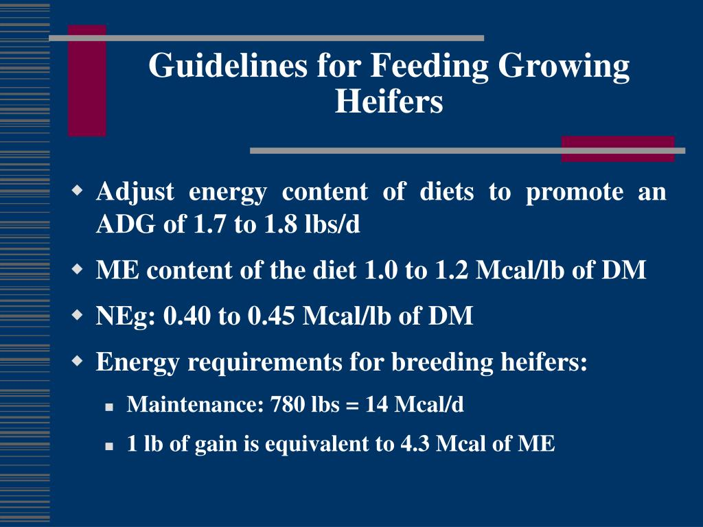 Guidelines for Feeding Growing Heifers