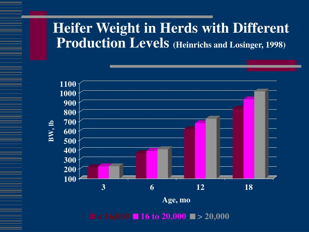 Heifer Weight in Herds with Different Production Levels