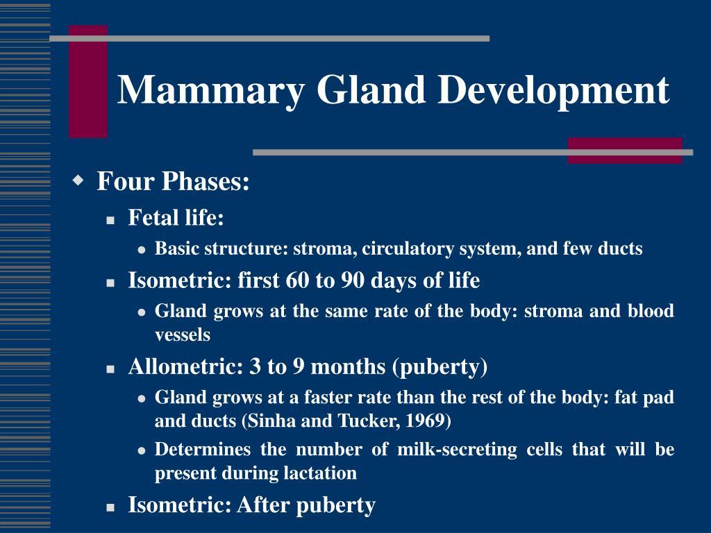 Mammary Gland Development