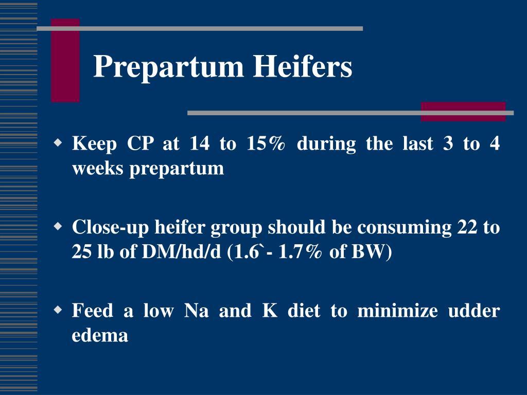 Prepartum Heifers