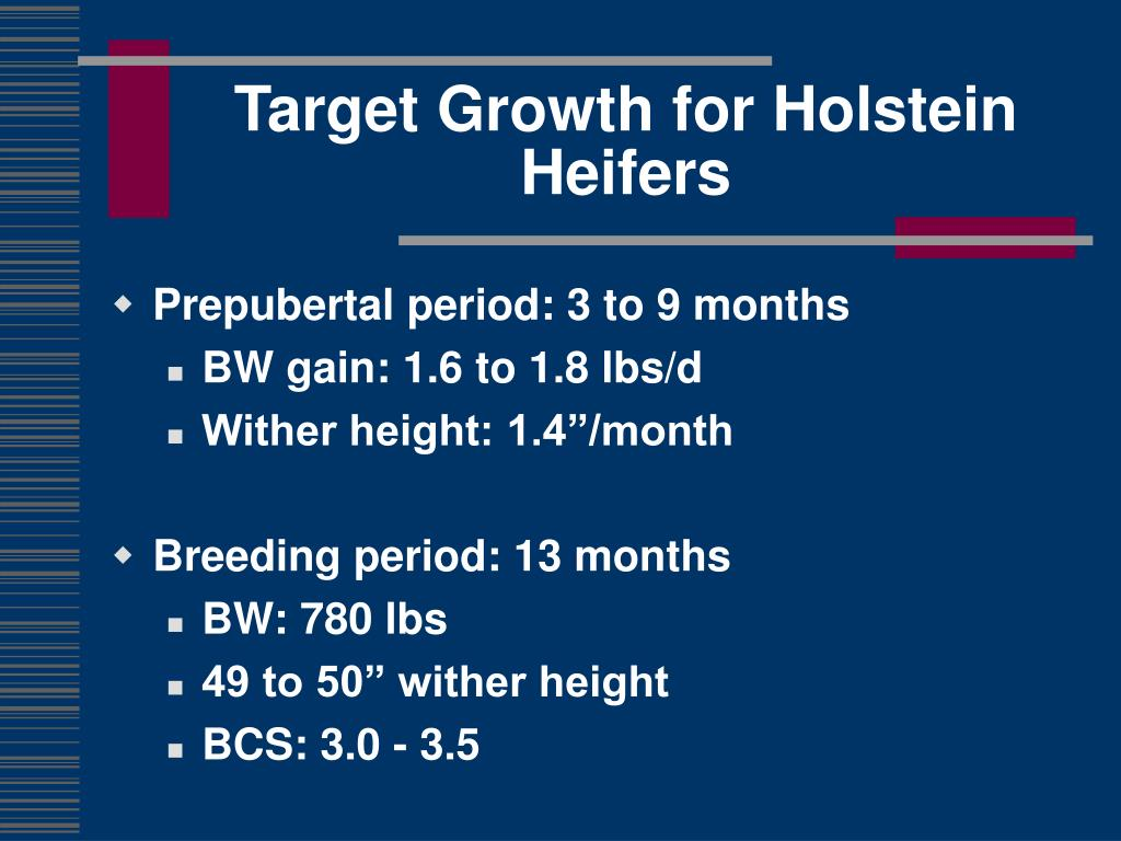Target Growth for Holstein Heifers