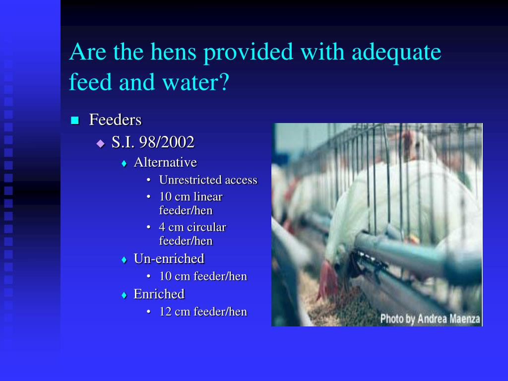 Are the hens provided with adequate feed and water?