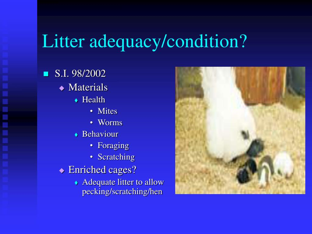Litter adequacy/condition?