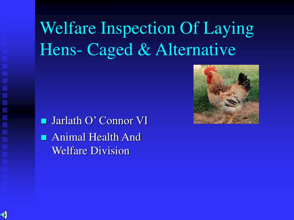 Welfare Inspection Of Laying Hens- Caged & Alternative
