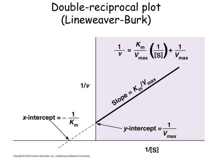 Double-reciprocal plot
