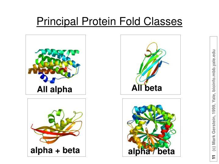 Principal Protein Fold Classes