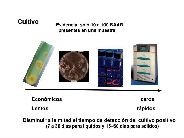 Evidencia  sólo 10 a 100 BAAR presentes en una muestra