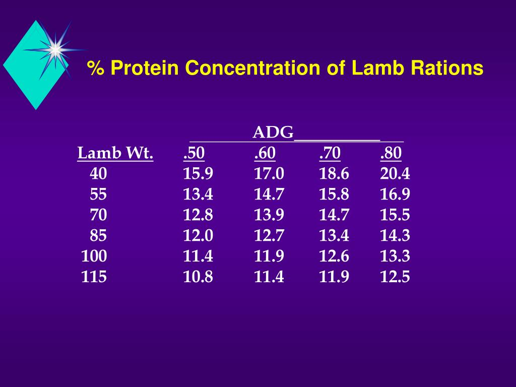 % Protein Concentration of Lamb Rations