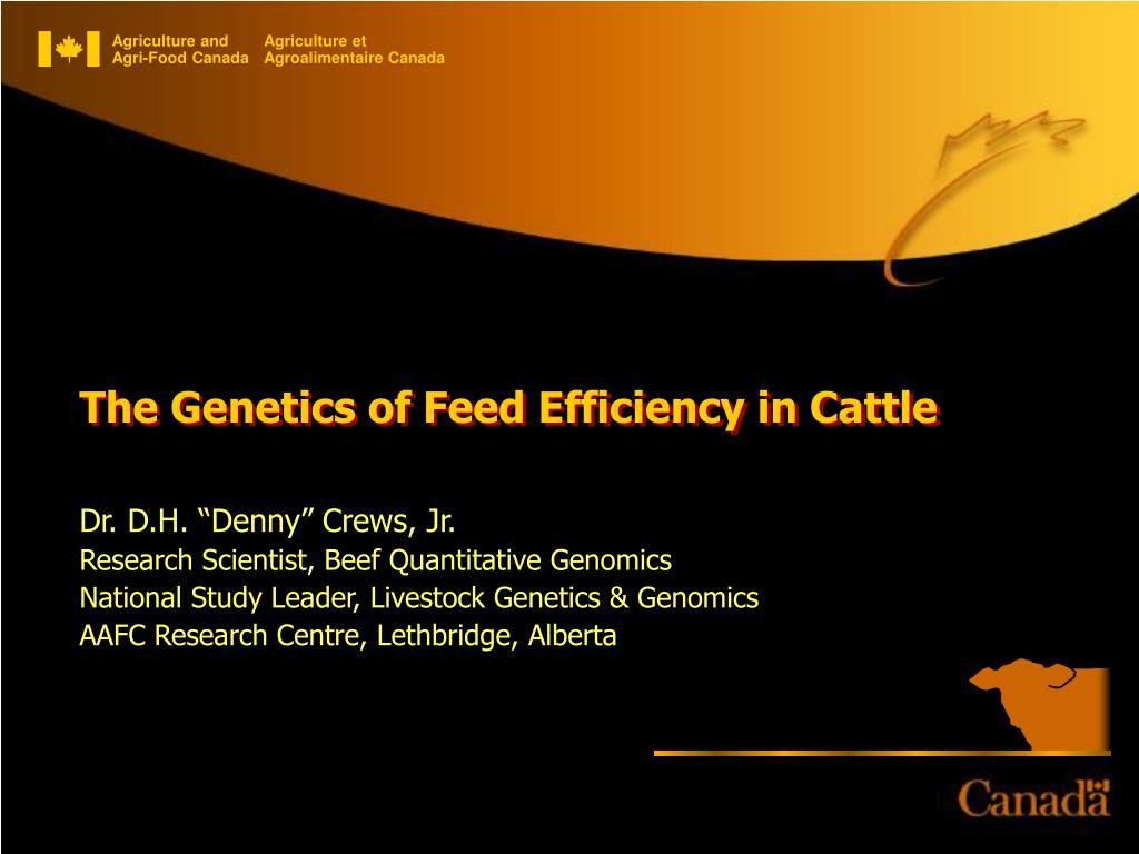 The Genetics of Feed Efficiency in Cattle