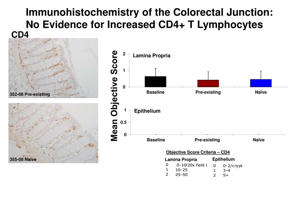 Immunohistochemistry of the Colorectal Junction: