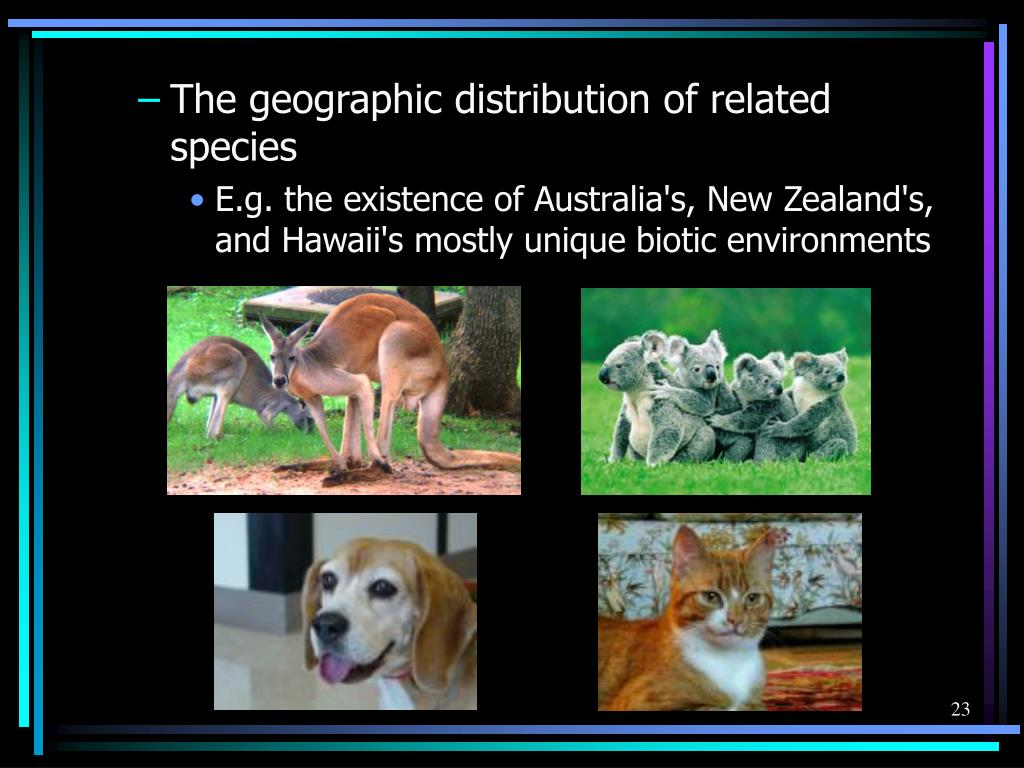 The geographic distribution of related species