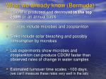 what we already know bermuda