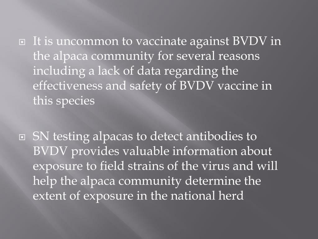 It is uncommon to vaccinate against BVDV in the alpaca community for several reasons including a lack of data regarding the effectiveness and safety of BVDV vaccine in this species