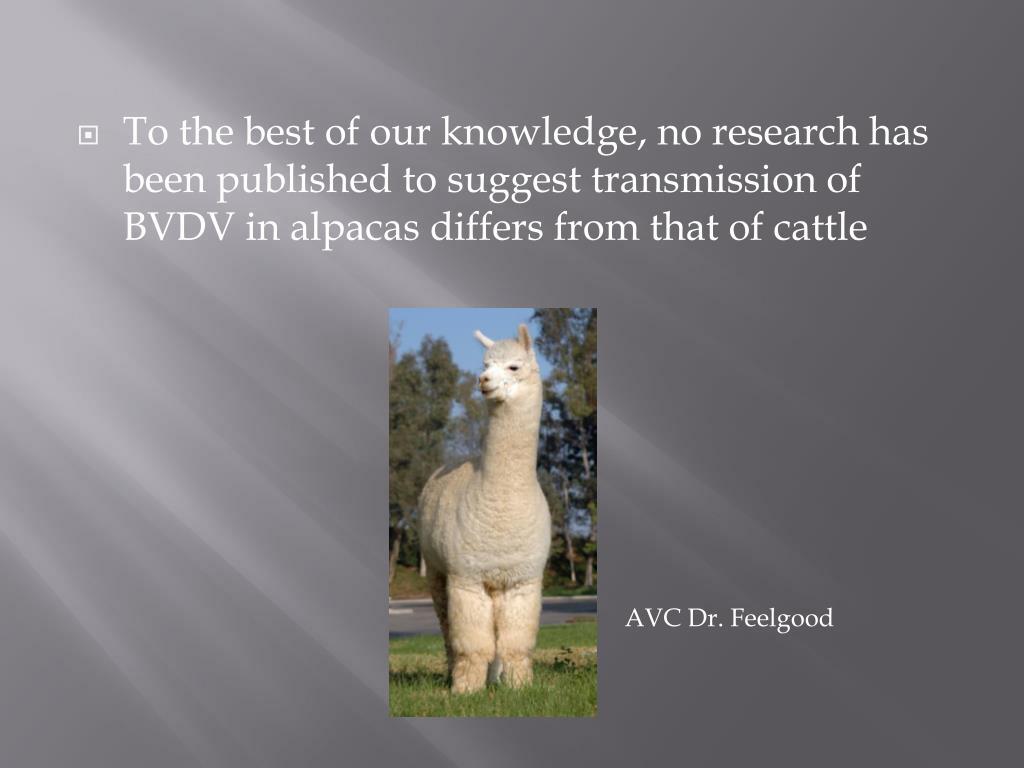 AVC Dr. Feelgood