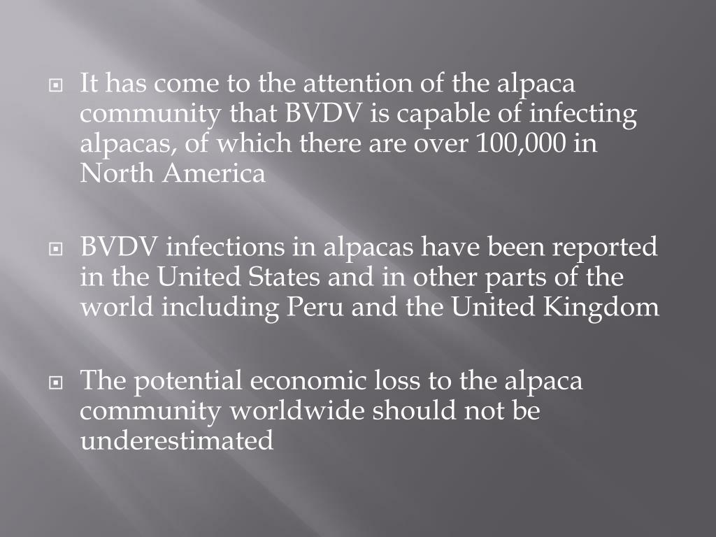 It has come to the attention of the alpaca community that BVDV is capable of infecting alpacas, of which there are over 100,000 in North America