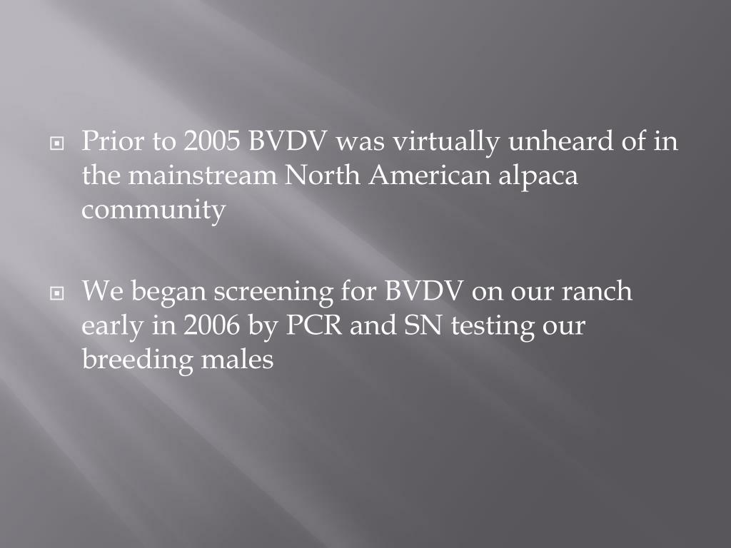 Prior to 2005 BVDV was virtually unheard of in the mainstream North American alpaca community