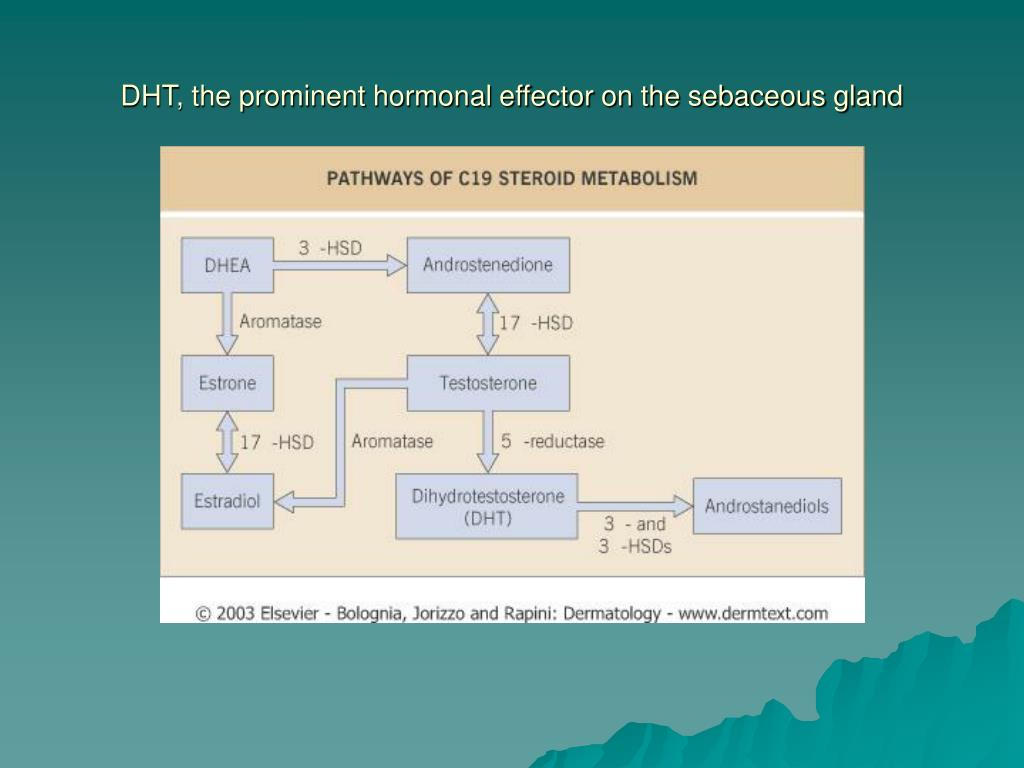 DHT, the prominent hormonal effector on the sebaceous gland