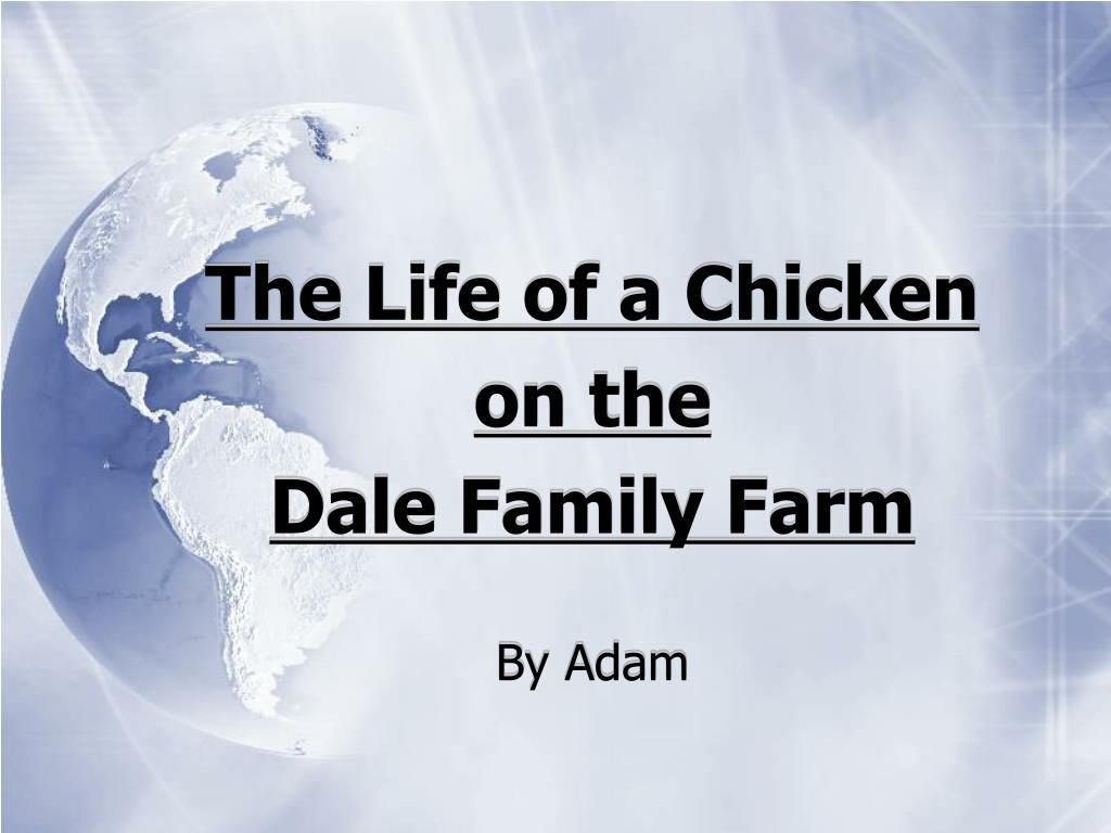 The Life of a Chicken