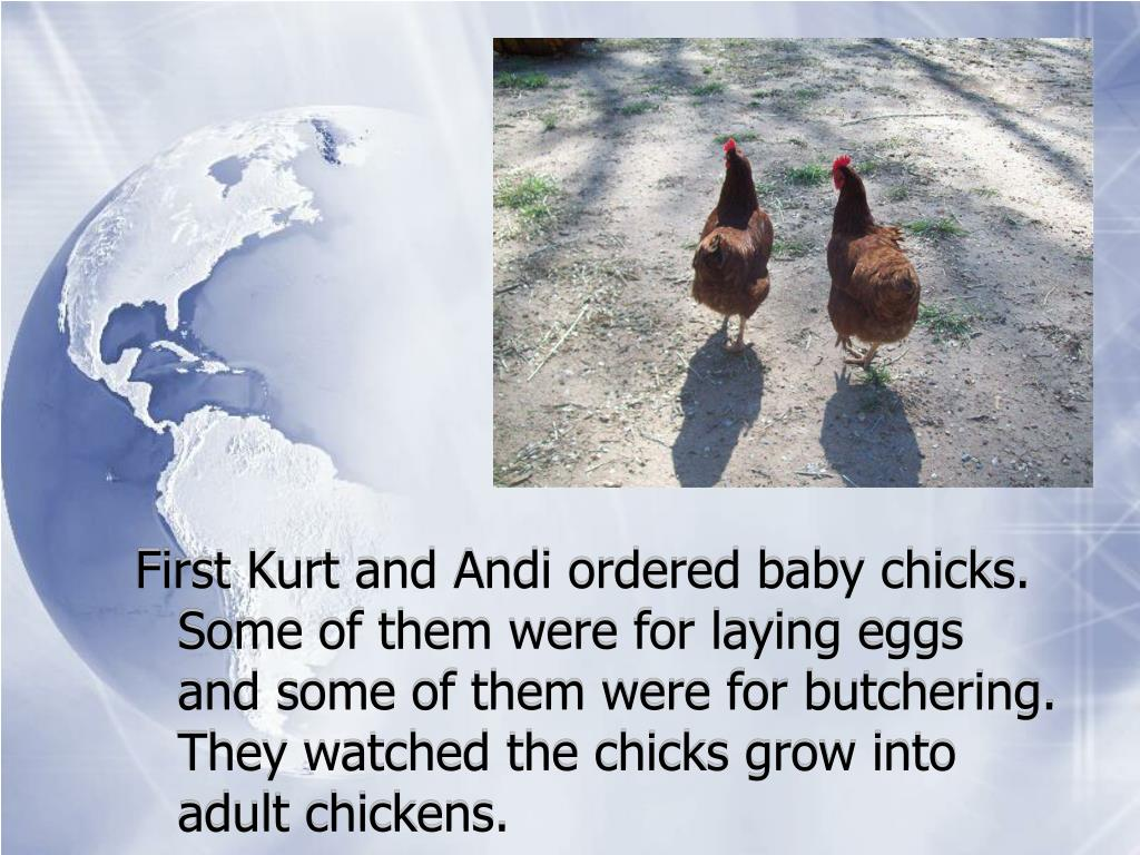 First Kurt and Andi ordered baby chicks.  Some of them were for laying eggs and some of them were for butchering.  They watched the chicks grow into adult chickens.