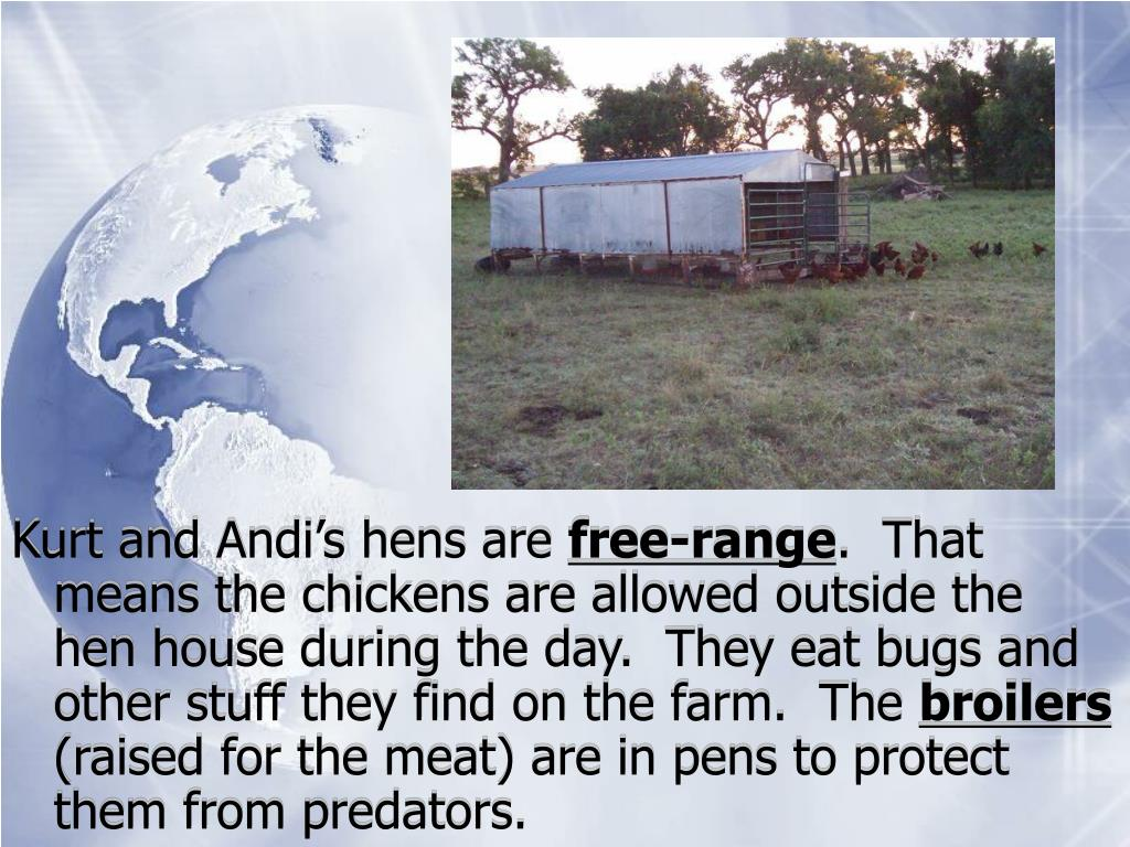 Kurt and Andi's hens are