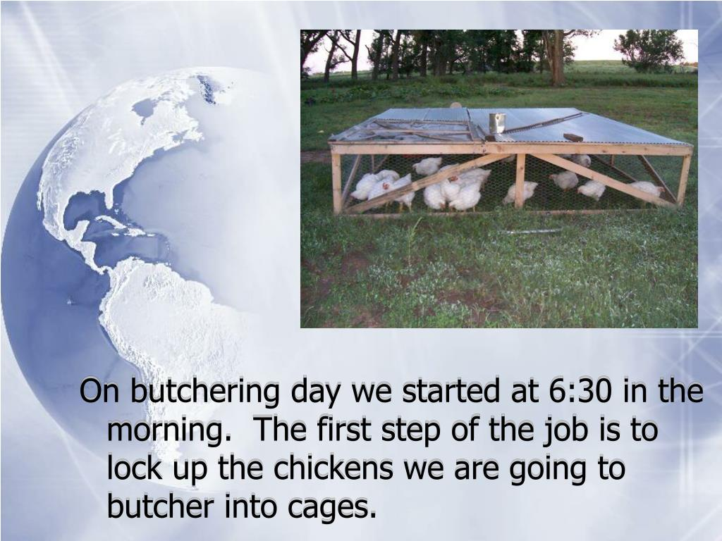 On butchering day we started at 6:30 in the morning.  The first step of the job is to lock up the chickens we are going to butcher into cages.