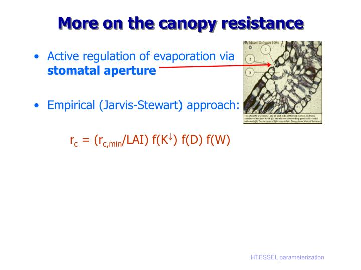 More on the canopy resistance