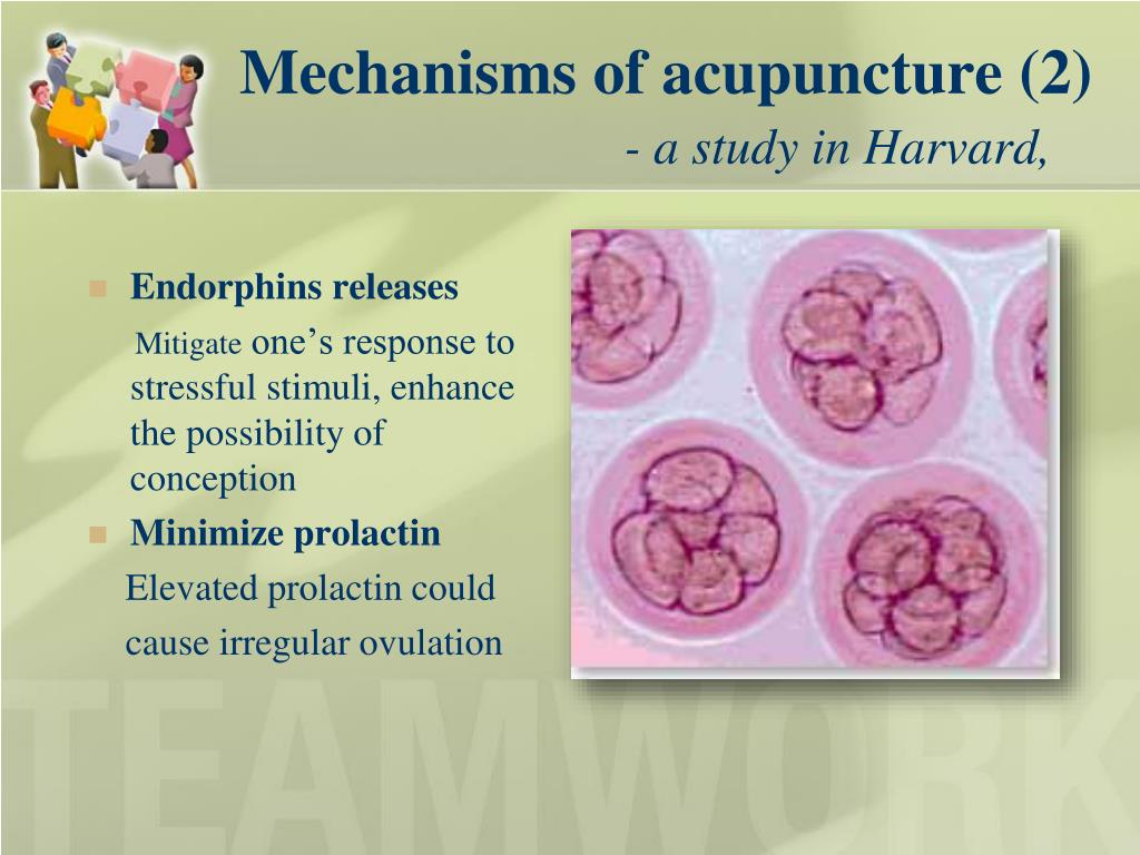 Mechanisms of acupuncture (2)