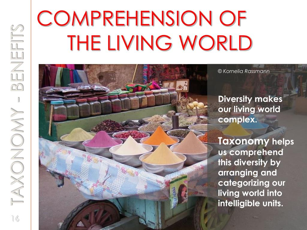 COMPREHENSION OF   	THE LIVING WORLD