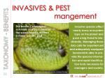 invasives pest mangement