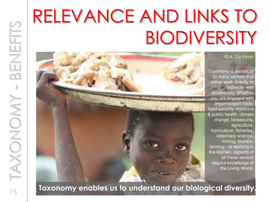 RELEVANCE AND LINKS TO 				 BIODIVERSITY