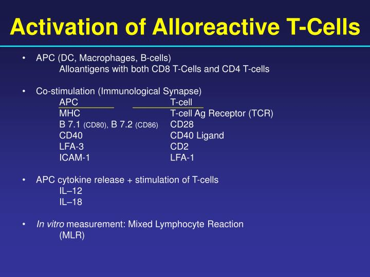 Activation of Alloreactive T-Cells