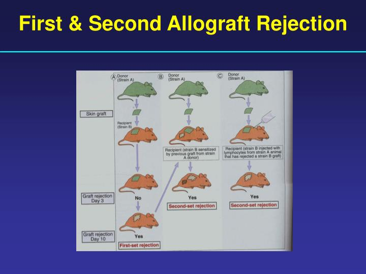 First & Second Allograft Rejection