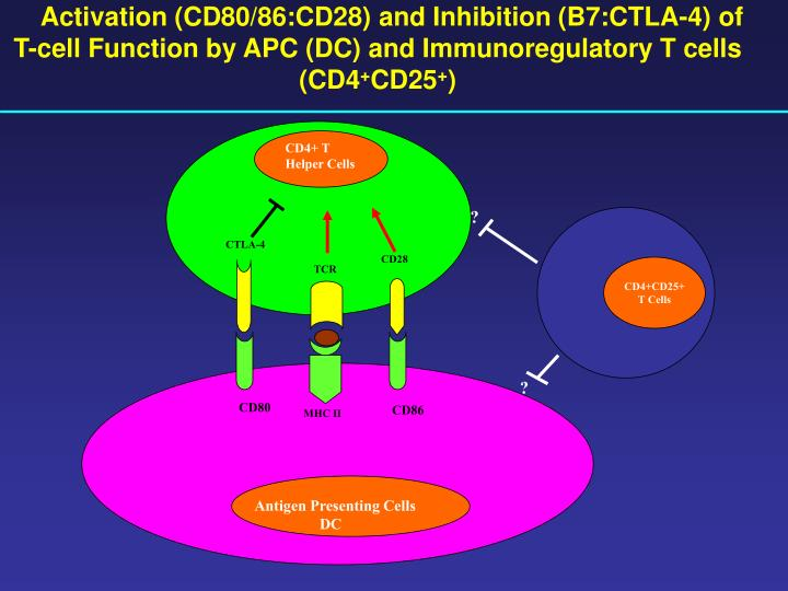 Activation (CD80/86:CD28) and Inhibition (B7:CTLA-4) of