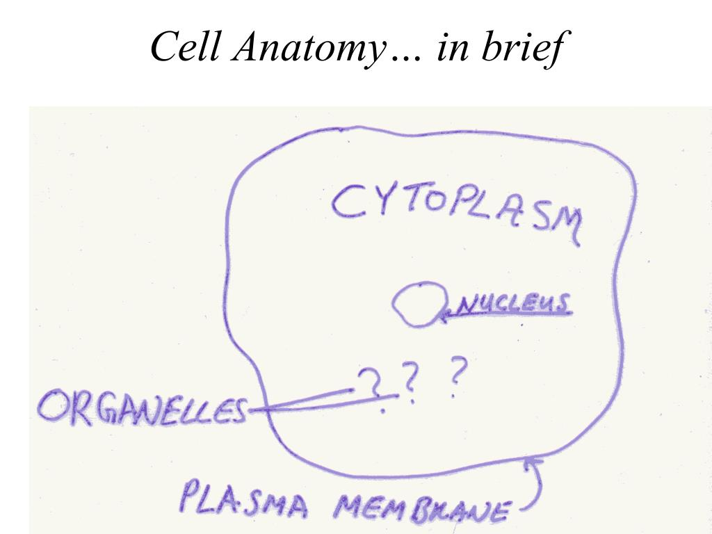 Cell Anatomy… in brief