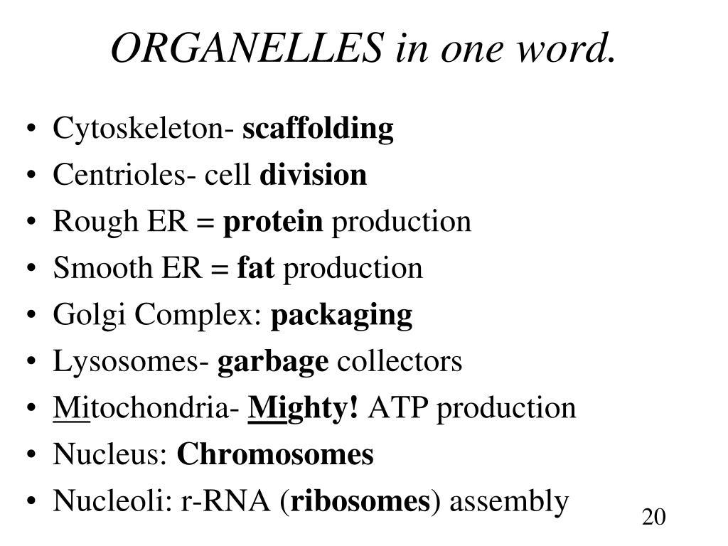 ORGANELLES in one word.