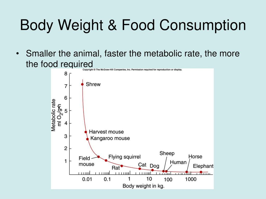 Body Weight & Food Consumption
